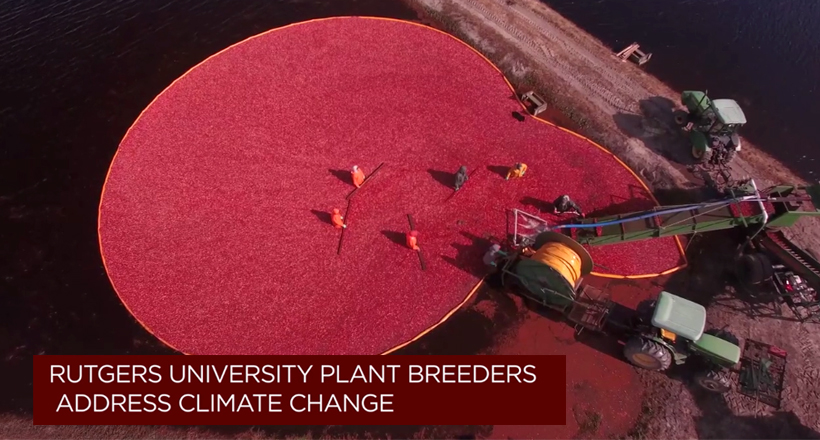 Rutgers University Plant Breeders Respond to Climate Change