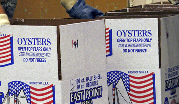 oysters boxed for shipping