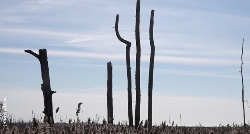 Ghost Forest, Delaware Bay area, New Jersey